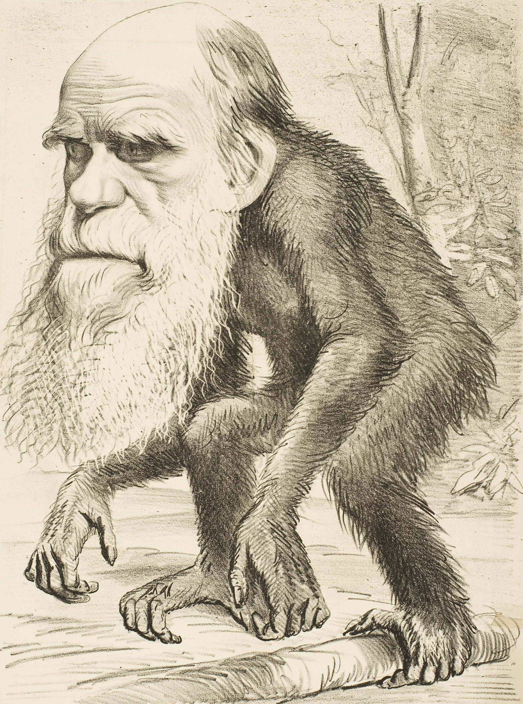 Caractiture of Charles Darwin 1871 (source: wikipedia)